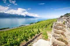 Panorama view of Villeneuve city with Swiss Alps, lake Geneva and vineyard on Lavaux region, Canton Vaud, Switzerland, Europe.  stock images