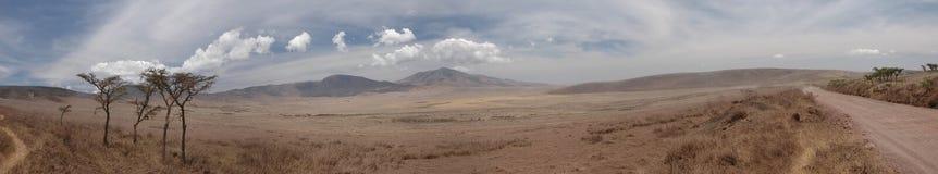 panorama- vildmark för treessikt Arkivfoto