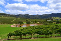 Panorama of vineyard with pond and hills Royalty Free Stock Photo