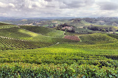 Panorama of vineyards Stock Photography