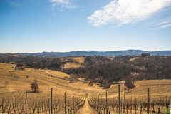 Panorama of Vineyards. Leibnitz area south Styria travel spot. Austria - Slovenia border. Vineyards Sulztal, Leibnitz area south Styria wine street, wine country stock photo
