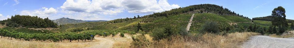 Panorama of vineyards in the mountains. Royalty Free Stock Photo