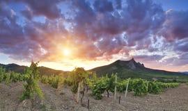 Panorama of the vineyards Royalty Free Stock Image
