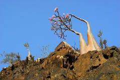 Panorama von Detwah Lagune Lizenzfreie Stockfotografie