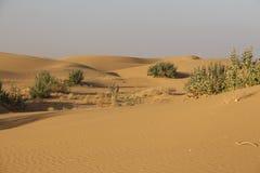 Panorama von Dünen in Thar-Wüste, Rajasthan, Indien Lizenzfreies Stockfoto