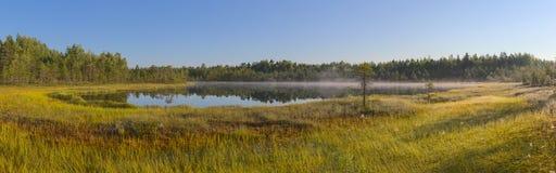 Panorama von einem Waldsee und -sumpf Stockbild