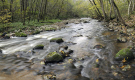 Panorama von einem wilden Fluss Stockbilder