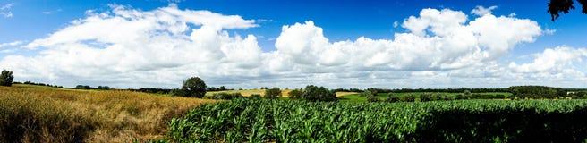 Panorama von Feldern und von Wiesen Stockbild