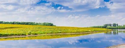 Panorama von Fluss mit einem Feld von Sonnenblumen auf Bank Lizenzfreie Stockfotos