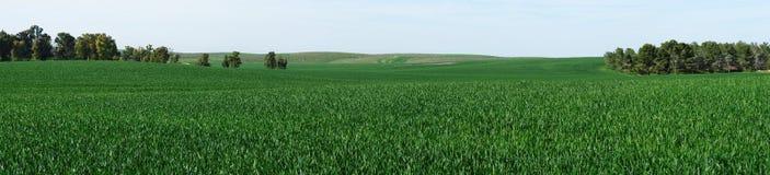 Panorama von grünen Wiesen im Frühjahr Stockbilder