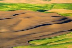 Panorama von Palouse, Washington State Lizenzfreies Stockbild