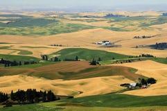 Panorama von Palouse, Washington State Stockfotos