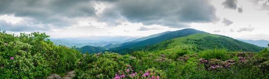 Panorama von rundem kahlem von Jane Bald Lizenzfreies Stockbild