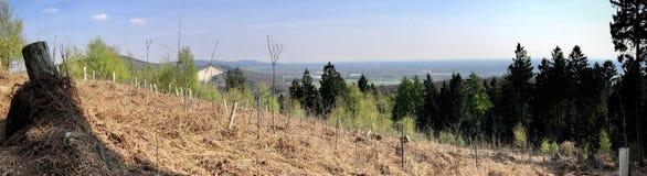 Panorama von Sämlingen von jungen Bäumen und von Hügeln im Hintergrund Lizenzfreies Stockbild