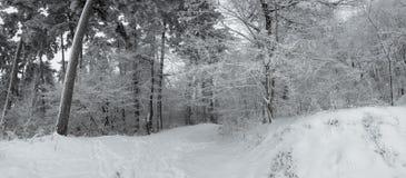Panorama von starken Schneefällen in den Wald lizenzfreie stockfotos