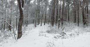 Panorama von starken Schneefällen in den Wald lizenzfreies stockbild