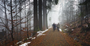 Panorama of walkers in misty forest at autumn Stock Image