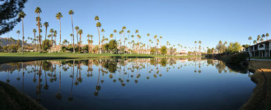 Panorama of water reflectig palm trees Royalty Free Stock Image