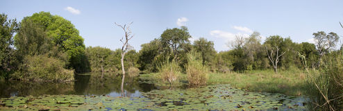 Panorama of a waterhole. In the Kruger National Park of South Africa Stock Photography
