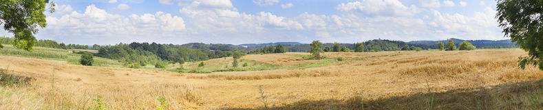 Panorama of wheat field in the heels Stock Photography