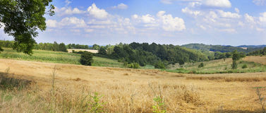Panorama of wheat field in the heels Royalty Free Stock Photo