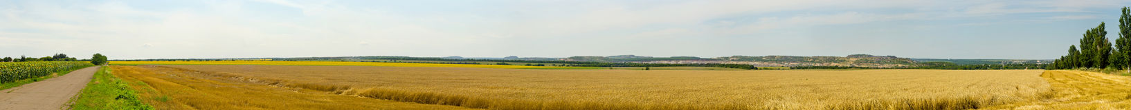 Panorama of the wheat field. Royalty Free Stock Images