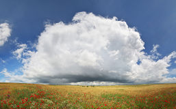 Panorama of wheat and poppy meadow. Royalty Free Stock Image