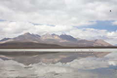 Panorama of the White Lagoon. (Laguna Blanca) in the Bolivian desert Stock Images