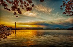Panorama with a wide-angle lens part of tidal basin at the sunrise during the Cherry Blossom Festival stock image