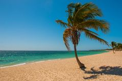 Panorama of wide, sandy beach on a tropical island with a coconut palm tree. The beautiful beach of Playa Ancon near Trinidad, Cub. A Stock Image