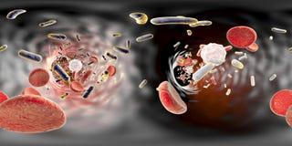 Panorama widok wśrodku naczynia krwionośnego z bakteriami Fotografia Royalty Free