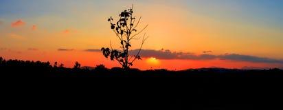 Panorama widoku sylwetki drzewo w zmierzchu na nieba miasta i krajobrazu wsi czasu pięknej kolorowej mrocznej sztuce natura Fotografia Royalty Free
