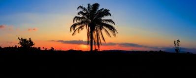 Panorama widoku sylwetki kokosowy drzewo w zmierzchu na nieba miasta i krajobrazu wsi czasu pięknej kolorowej mrocznej sztuce nat Zdjęcie Royalty Free