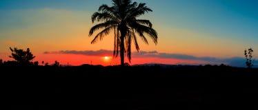 Panorama widoku sylwetki kokosowy drzewo w zmierzchu na nieba miasta i krajobrazu wsi czasu pięknej kolorowej mrocznej sztuce nat Obrazy Royalty Free
