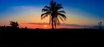 Panorama widoku sylwetki kokosowy drzewo w zmierzchu na nieba miasta i krajobrazu wsi czasu pięknej kolorowej mrocznej sztuce nat Zdjęcie Stock