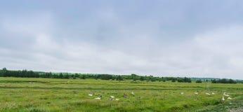 Panorama wiejska łąka z lasową rzeką i zwierzętami Zdjęcie Stock