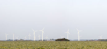 Panorama of wind turbines and cabbage field in the Netherlands Stock Images