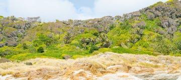 Panorama Windswept de Nova Zelândia com o arbusto nativo sempre-verde além do primeiro plano do junco foto de stock royalty free