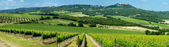 Panorama of wine fields in Italy Royalty Free Stock Image