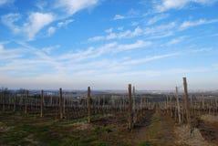 panorama winnica zdjęcie stock