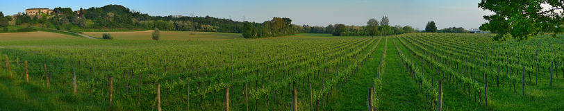 panorama winnica Obraz Stock