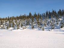 panorama winter Стоковые Фотографии RF