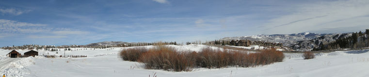 Panorama, winter aspens in snowfields Stock Image