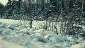 Panorama winter evening forest Stock Photography