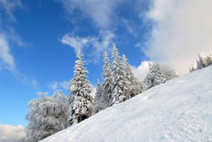 Panorama of the winter forest Stock Photo