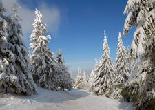Panorama of the winter forest Royalty Free Stock Images