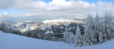 Panorama of the winter forest Stock Photos