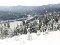 Panorama of winter forest with trees covered snow Royalty Free Stock Image