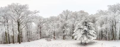Panorama of winter forest with trees covered snow Royalty Free Stock Photo