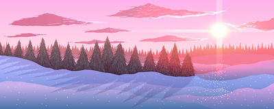 Panorama. Winter landscape. Fir trees forest in the sunset. Stock Images